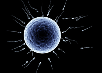 When is an embryo? (articles)